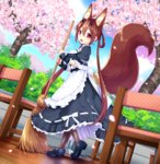 1girl animal_ears apron bangs black_legwear black_shoes blurry blush breasts broom brown_hair chair cherry_blossoms depth_of_field dutch_angle eyebrows_visible_through_hair fingerless_gloves frilled_apron frills from_side gloves hair_between_eyes hair_rings highres holding holding_broom looking_at_viewer maid mary_janes medium_breasts open_mouth outdoors pantyhose petals phantasy_star phantasy_star_online_2 polka_dot sakura_chiyo_(konachi000) shoes sidelocks smile solo standing tail twintails waist_apron