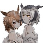 2girls bangs black_hair breasts brown_eyes brown_hair coat commentary eurasian_eagle_owl_(kemono_friends) eyebrows_visible_through_hair fur-trimmed_coat fur_trim head_wings inumoto jacket_pull kemono_friends looking_at_viewer medium_breasts multicolored_hair multiple_girls northern_white-faced_owl_(kemono_friends) off_shoulder parted_lips short_hair sideboob silver_hair simple_background undressing upper_body white_background white_coat yuri