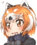 1girl animal_ear_fluff animal_ears bangs black_neckwear bow brown_eyes commentary eyebrows_visible_through_hair fur_collar highres kemono_friends lesser_panda_(kemono_friends) looking_at_viewer multicolored_hair orange_hair parted_lips portrait red_panda_ears short_hair simple_background solo thin_(suzuneya) two-tone_hair white_background white_hair