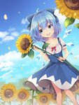 1girl :d absurdres ahoge bangs blue_eyes blue_hair blue_skirt blue_sky cirno cloud collarbone commentary_request day eyebrows_visible_through_hair feet_out_of_frame field flower flower_field frills hair_between_eyes hand_up high-waist_skirt highres holding holding_flower ice ice_wings looking_to_the_side open_mouth outdoors petals puffy_short_sleeves puffy_sleeves red_ribbon ribbon ruhika short_hair short_sleeves skirt sky smile solo standing sunflower touhou wings
