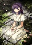 1girl bare_arms barefoot black_ribbon breasts buttons collared_dress commentary_request dress fate/stay_night fate_(series) full_body grass hair_ribbon heaven's_feel indoors long_hair looking_at_viewer matou_sakura medium_breasts nagu parted_lips plant puffy_short_sleeves puffy_sleeves purple_eyes purple_hair red_ribbon ribbon short_sleeves sitting solo wariza white_dress