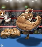 2019 action animal animal_focus cat check_commentary closed_eyes commentary_request crossed_arms crowd dog flexing fox furry matataku md5_mismatch meme muscle muscle_fox pose punching right-hook_dog shiba_inu surprised_cat_(matataku) twitter wrestling_ring