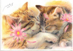 2010 animal cat cat_focus closed_eyes colored_pencil_(medium) cuddling flower fur kaminaga_mutsumi no_humans original petals realistic signature sleeping traditional_media